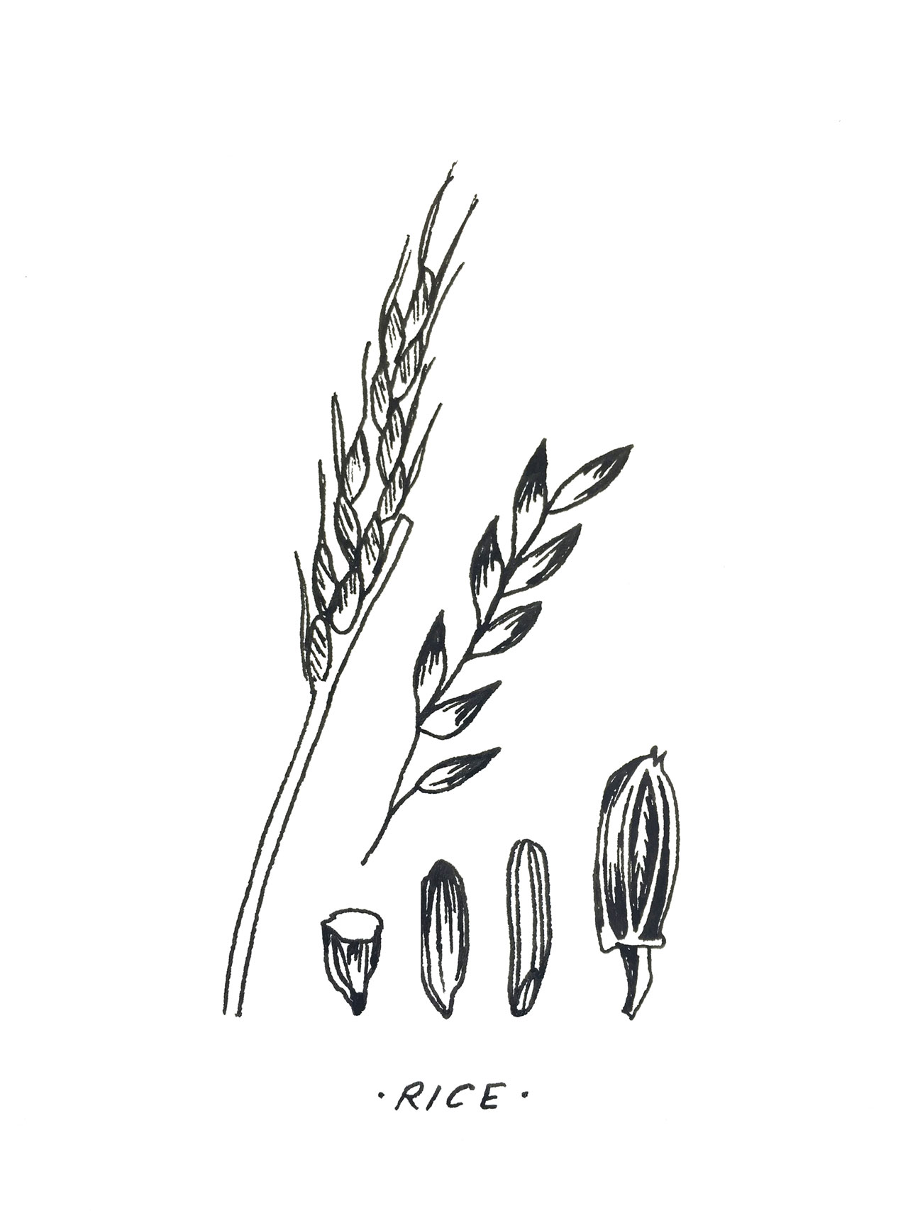 Grains for Thoughts